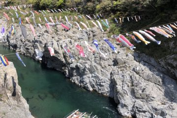 大歩危(おおぼけ)峡観光遊覧船の鯉のぼり