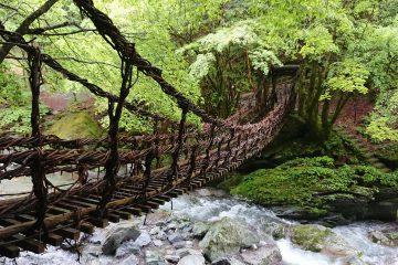 新緑の祖谷、かずら橋(奥祖谷二重かずら橋、野猿)